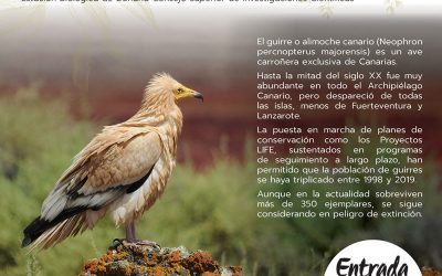 La conservación del Guirre en Canarias, situación actual y perspectivas de futuro