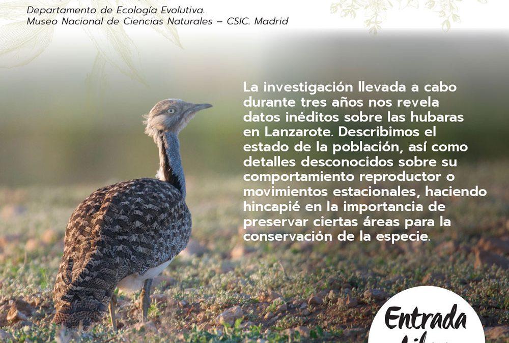 La avutarda hubara, especie canaria en peligro de extinción