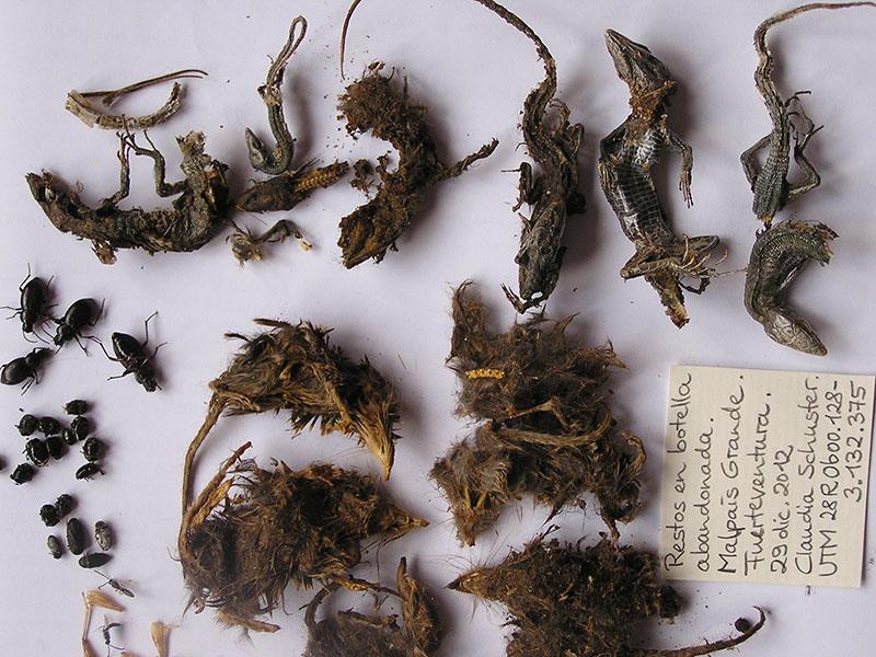 Identificación de restos óseos de pequeños vertebrados