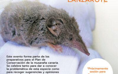 Pensando en las musarañas canarias, su biología y conservación